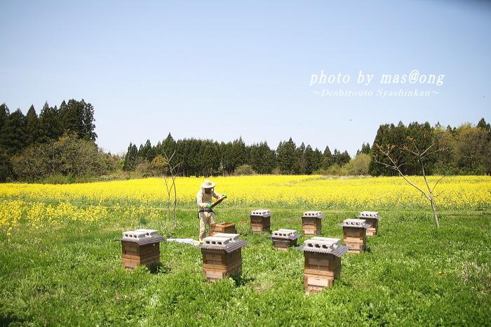 阿賀野市 養蜂 八米