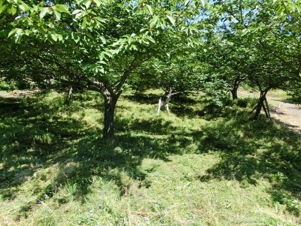 瓢湖周辺の草刈り